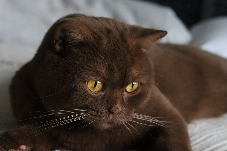 Darf ich meine neue Mitbewohnerin vorstellen – Katze Nala